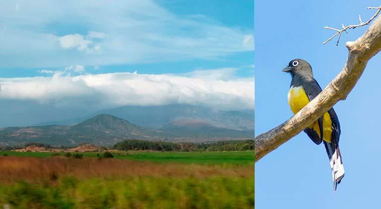 Birding tour Costa Rica