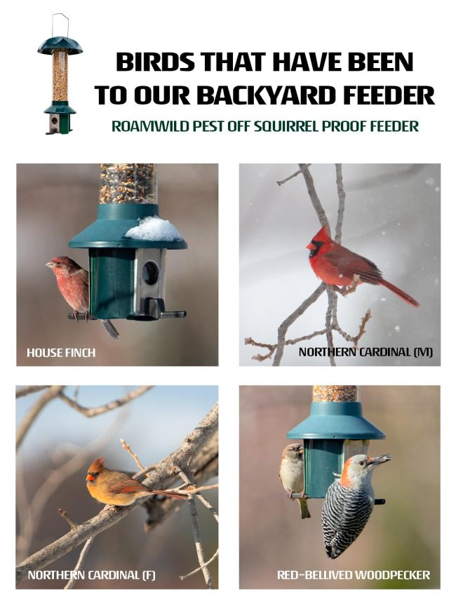 backyard bird feeder bird list