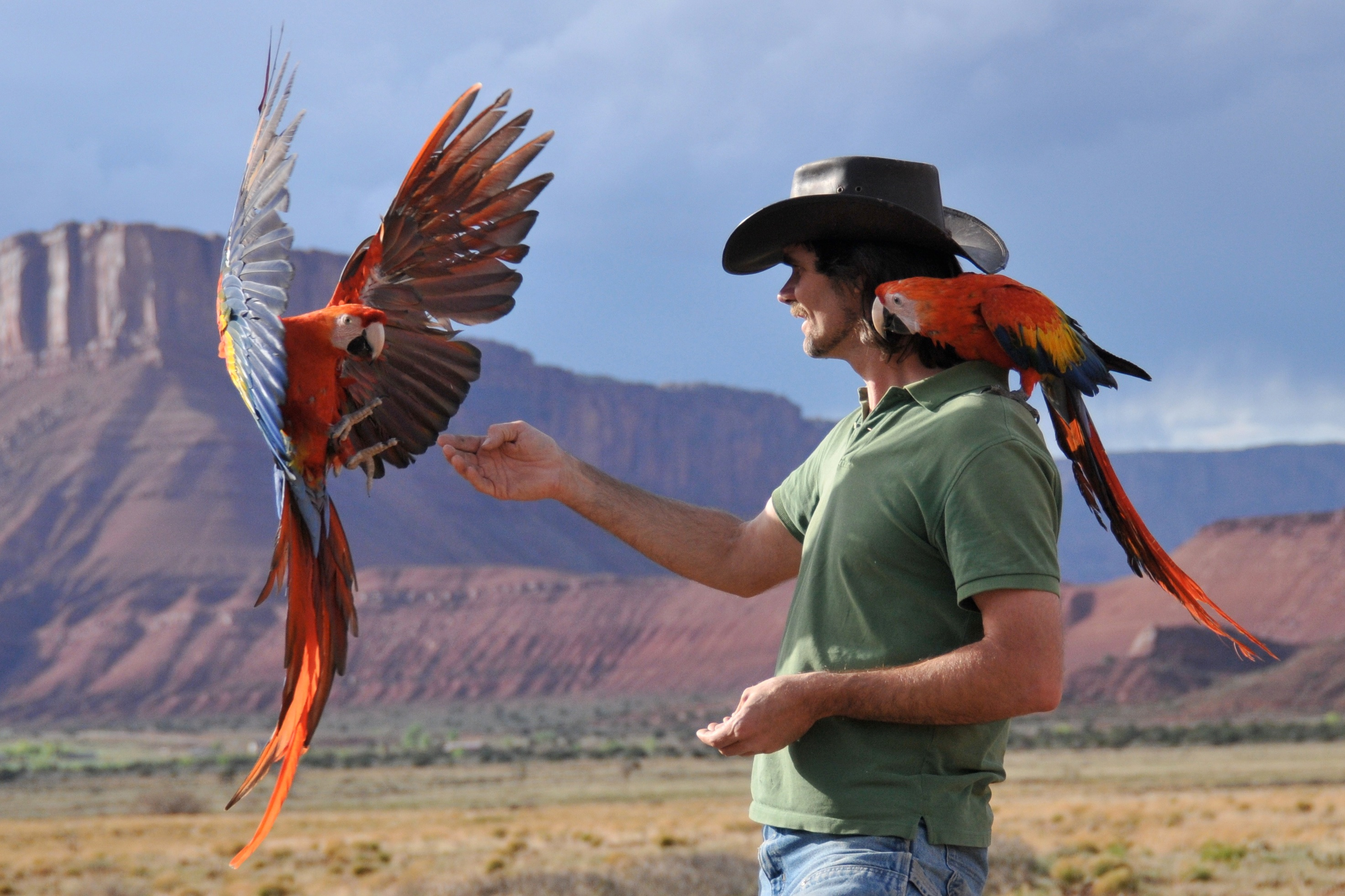 helping birds on the