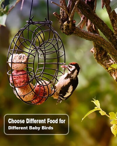 Baby Birds - What to Feed a Baby Bird without Feathers