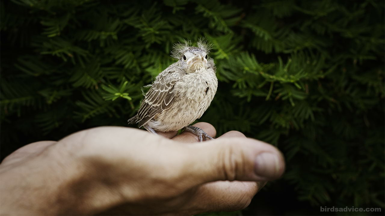 How to Save a Baby Bird from Dying