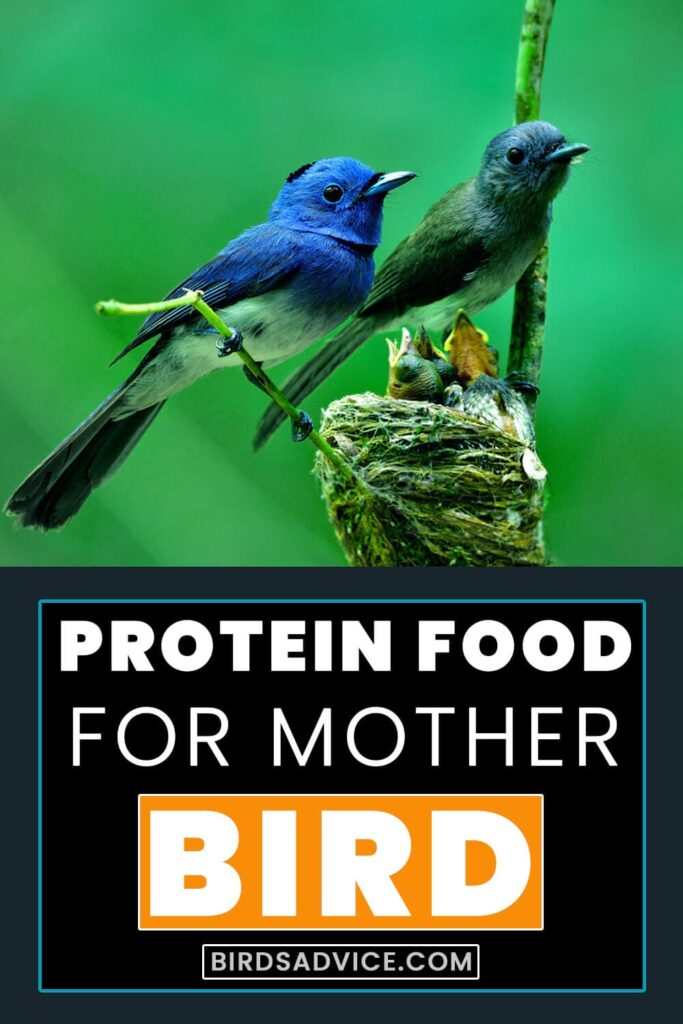 How Do Mother Birds Feed Their Babies? PInterest Pin
