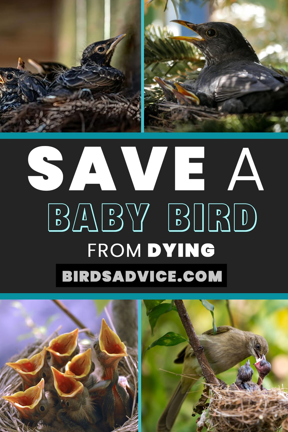 Save a Baby Bird From Dyin
