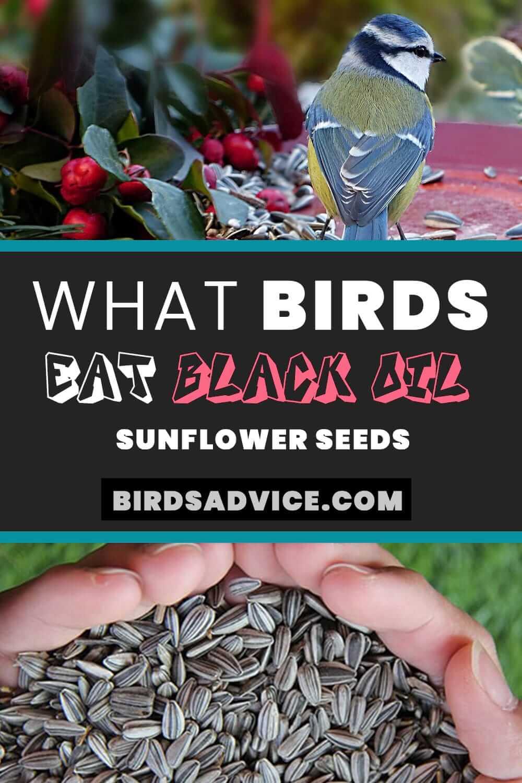 Black Oil Sunflower Seeds | Pinterest Pin