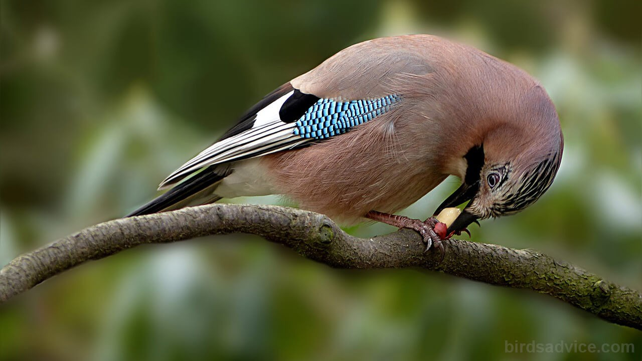 What Can Birds Not Eat? 12 Toxic Foods For The Birds