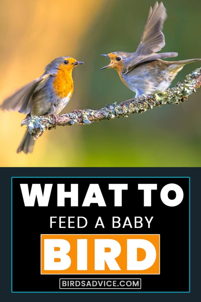 what to feed a baby bird without feathers? Pinterest Pin
