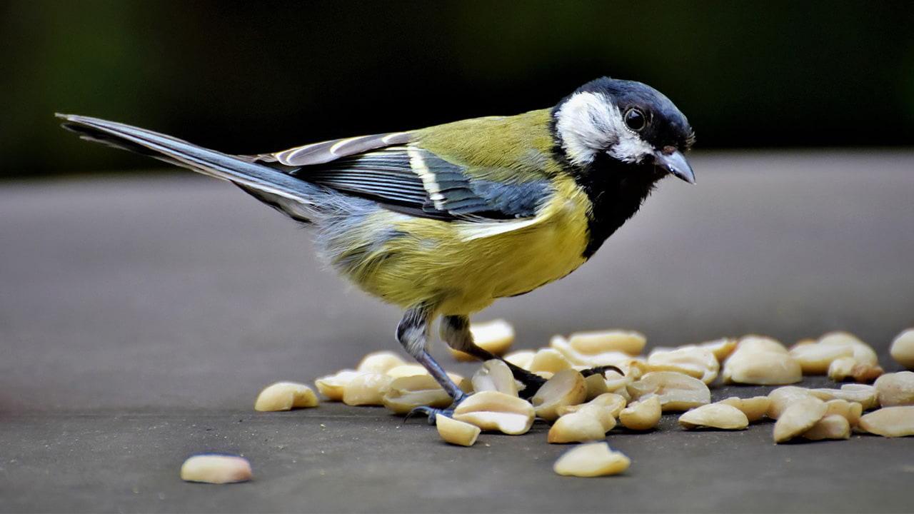 Peanuts food for birds