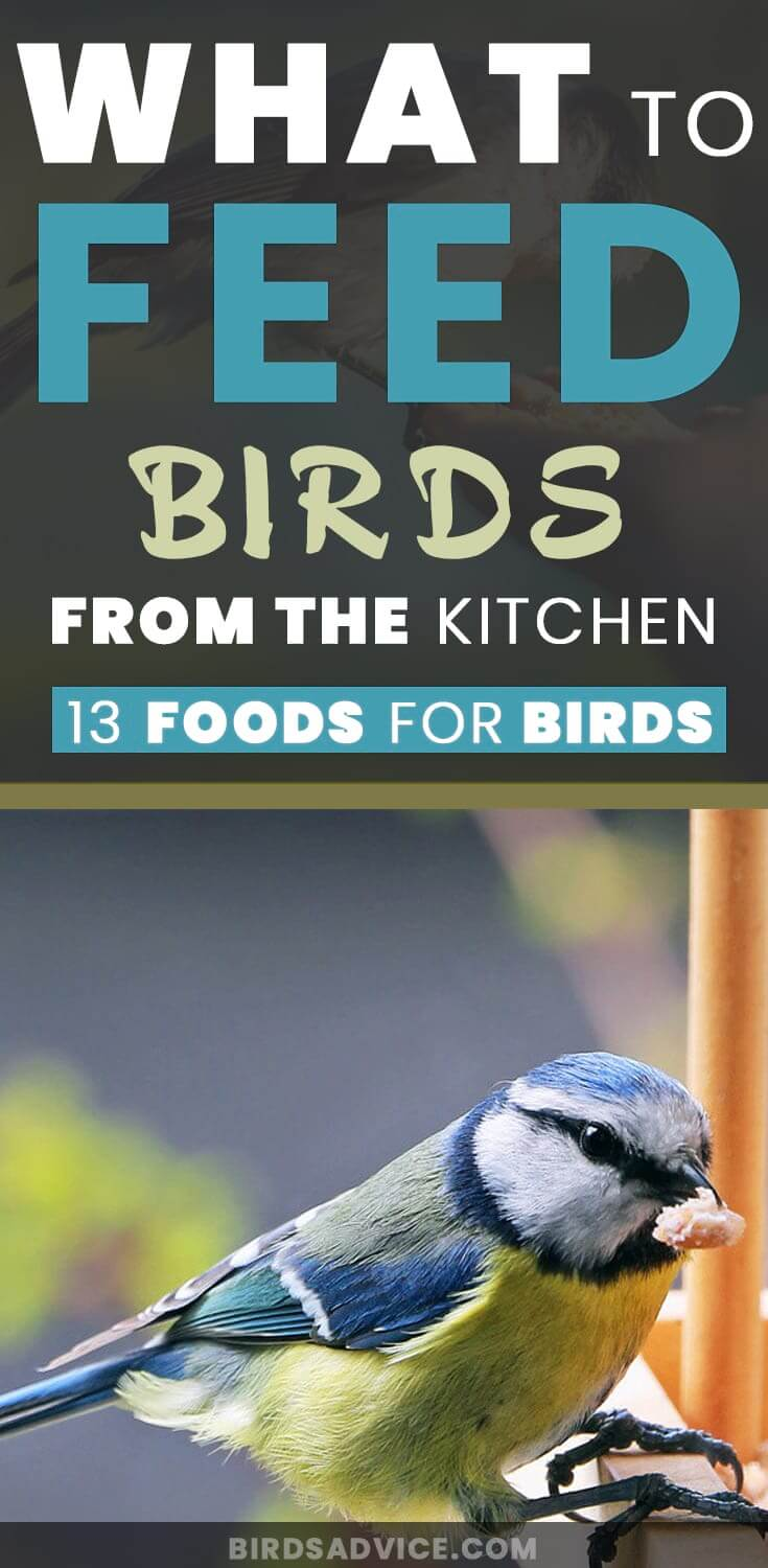 Feed Birds From The Kitchen