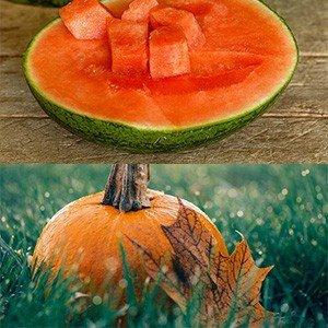 Melon And Pumpkin Info