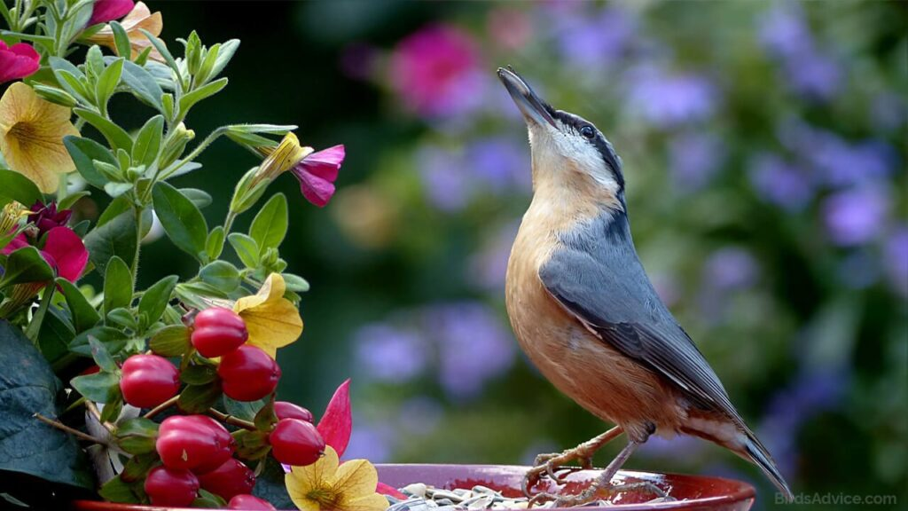What to Feed Birds from the Kitchen