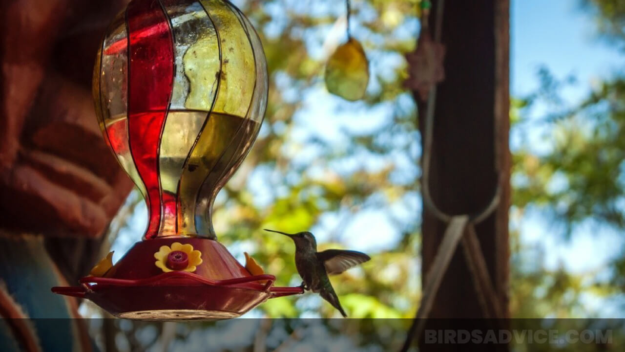 8 Best Hummingbird Feeders In 2021 | Complete Buying Guide