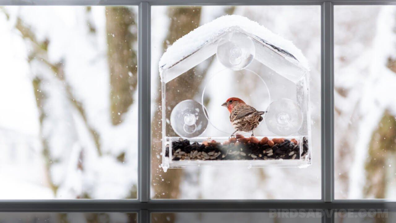 8 Best Window Bird Feeders In 2021 | Proper Buying Guide