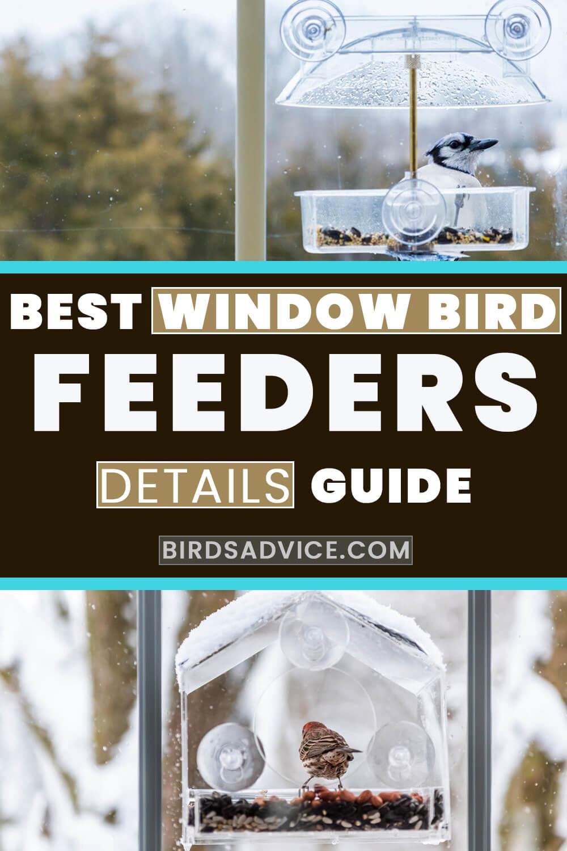 Best Window Bird Feeder Reviews | Pinterest Pin