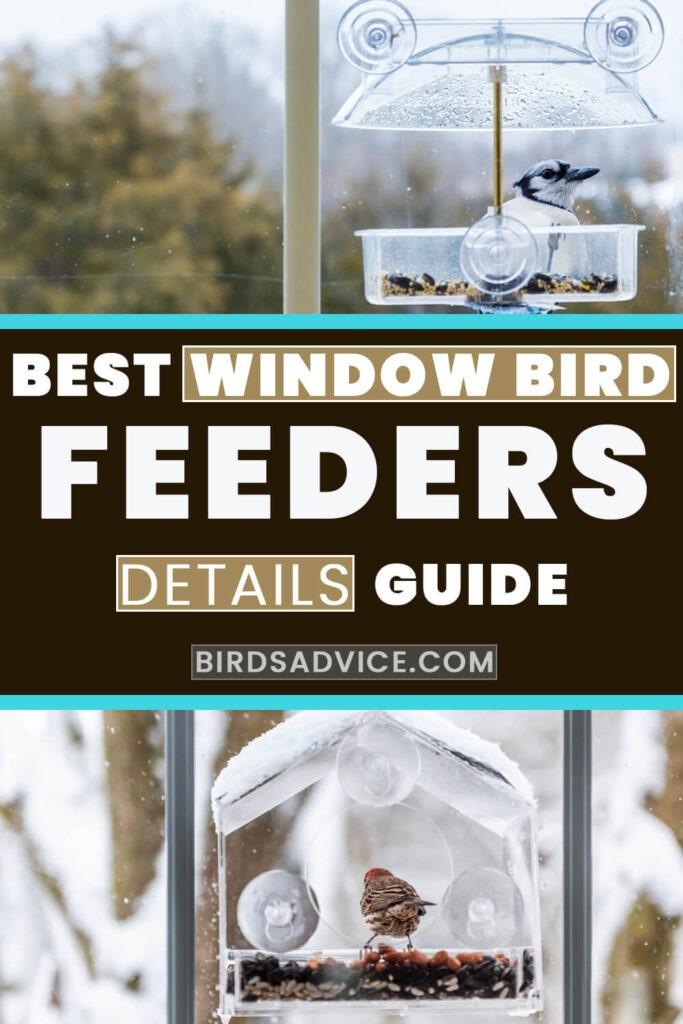 Best Window Bird Feeder Pin