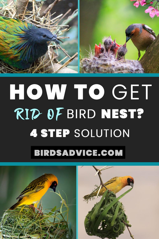 Rid of Bird Nest