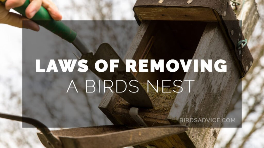 Laws of Removing a Birds Nest