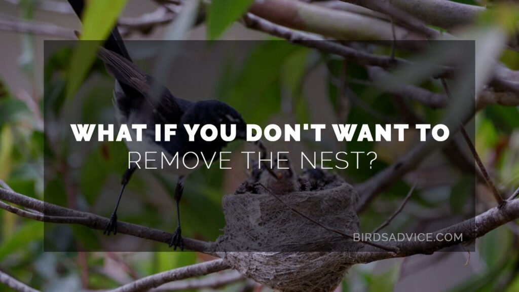 What if You Don't Want to Remove the Nest