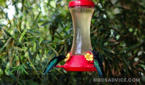 Hummingbird Feeder And Nectar