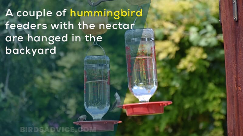 A couple of hummingbird feeders