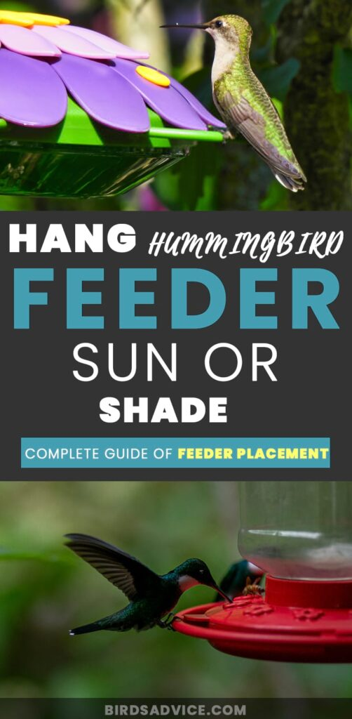 Hang Hummingbird Feeder Sun or Shade