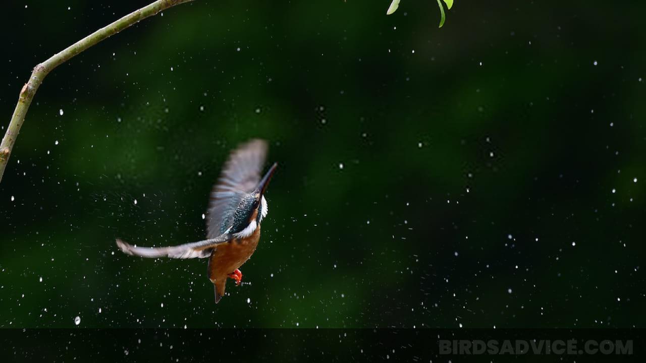 Hummingbirds In Winter: How To Help Hummingbirds Behavior