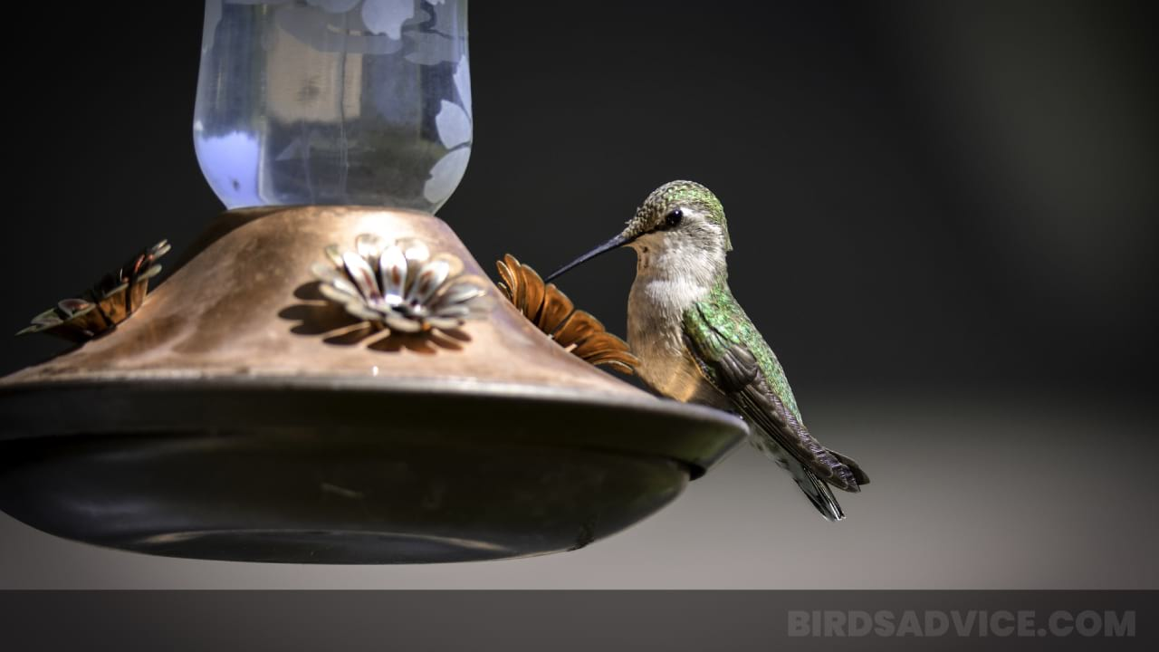 How to Keep Hummingbird Feeder from Freezing