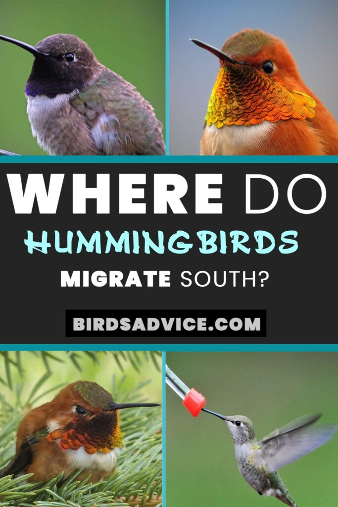 Hummingbirds Migrate South