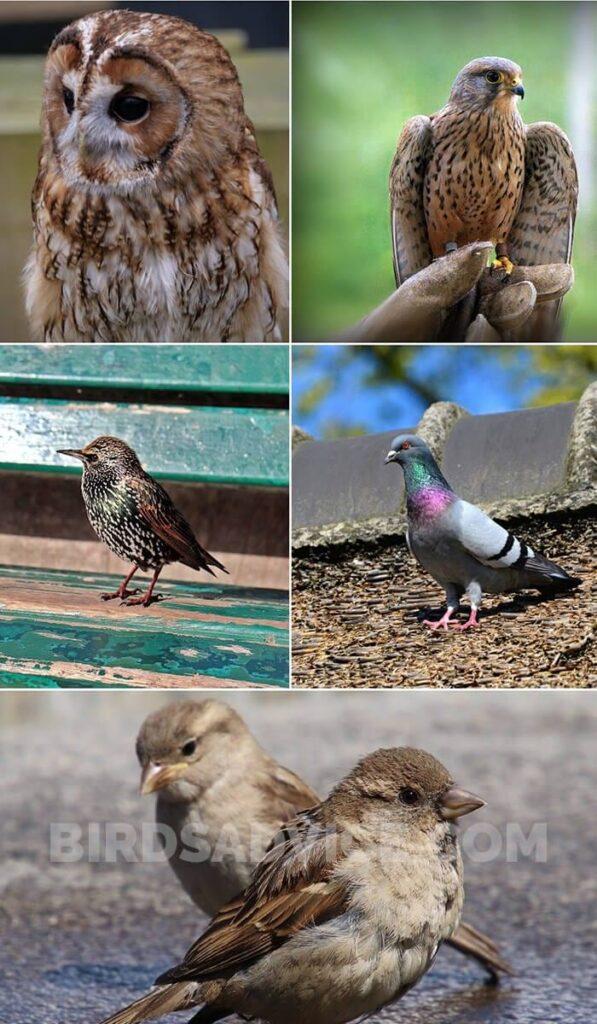 Invasive Birds