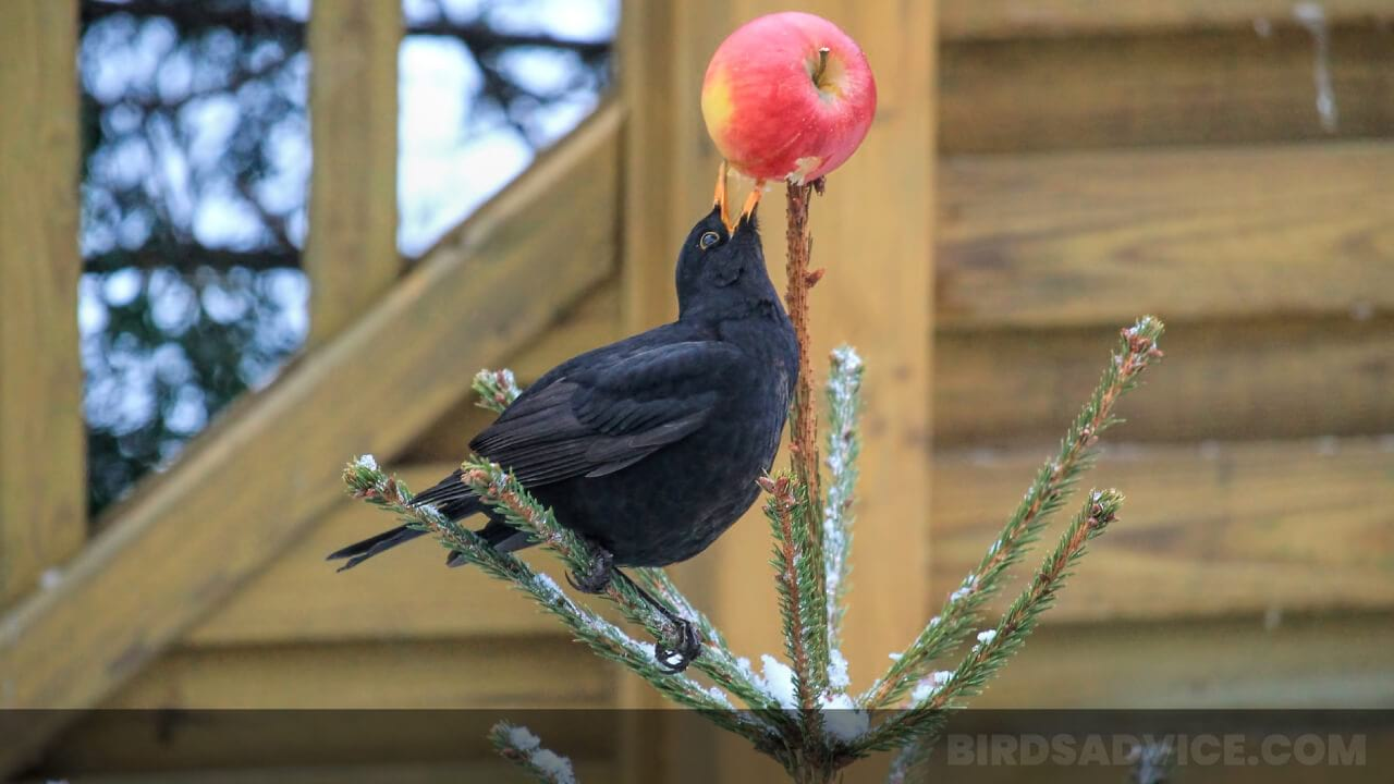 What Do Birds Eat In The Wild? Complete Guide