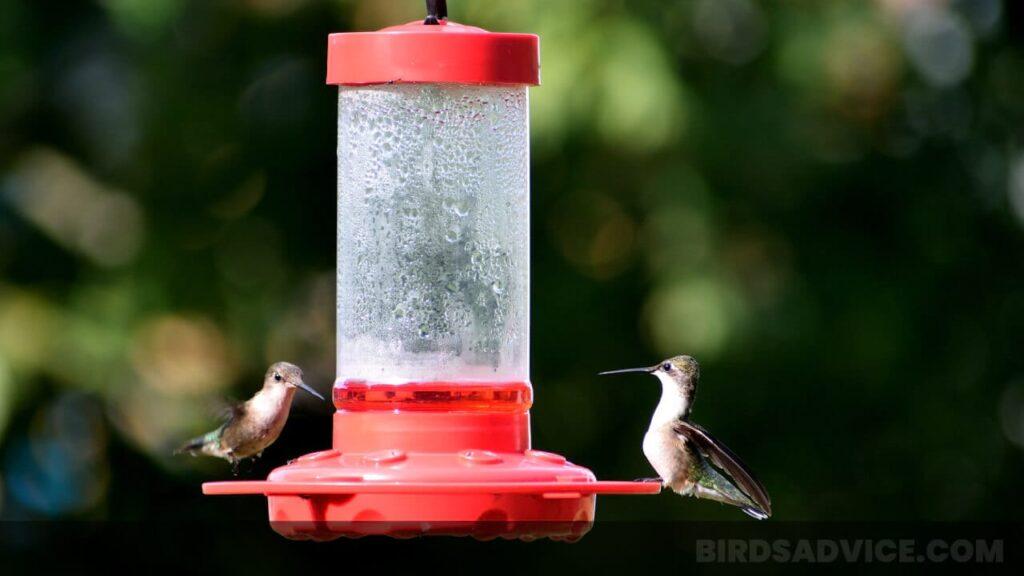 Where to Hang Hummingbird Feeder Sun or Shade
