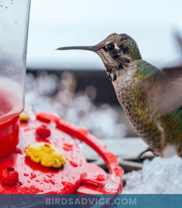 Winter hummingbird feeder