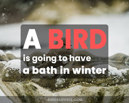 A bird is going to have a bath in winter.