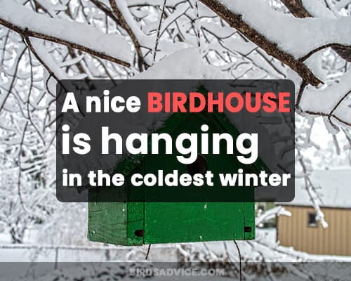A nice birdhouse is hanging in the coldest winter.