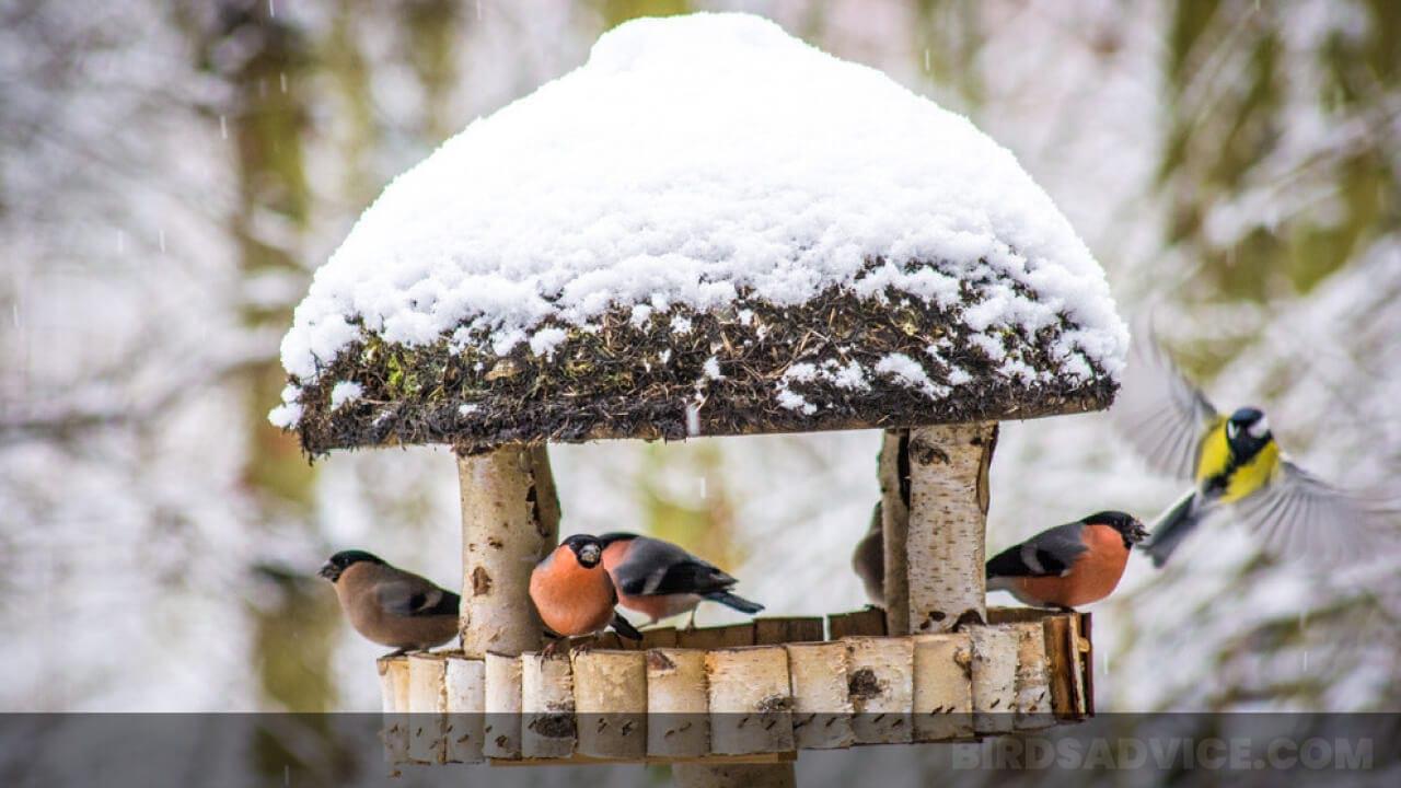 Do Birds Use Birdhouses In Winter? Birds Advice