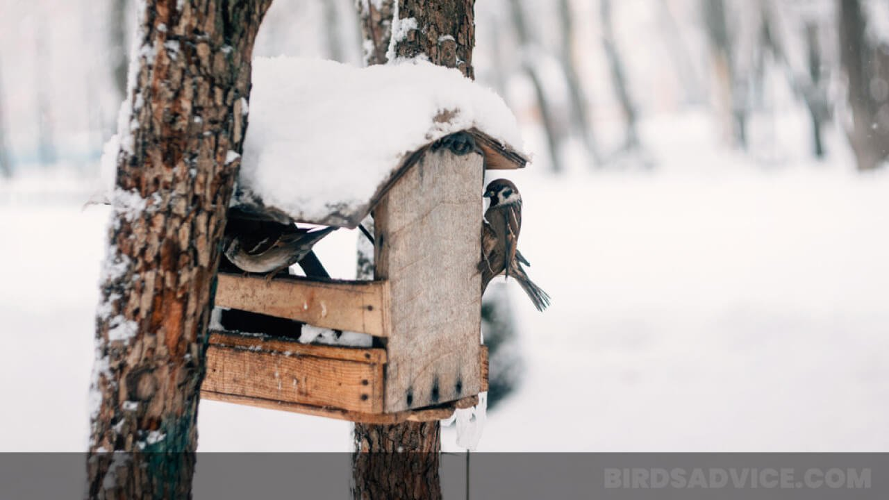 How Do Birds Survive in the Winter