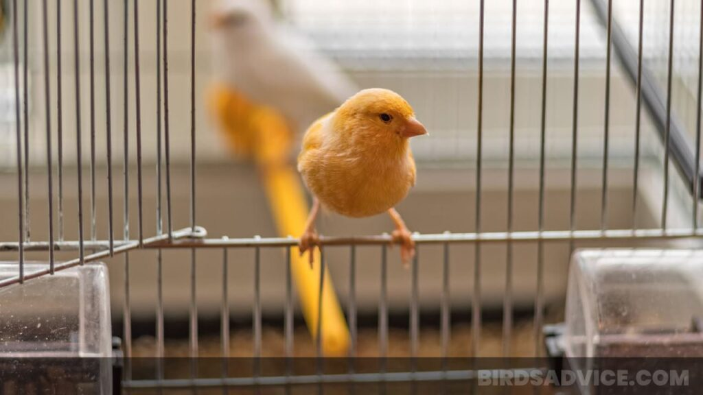 How to Make a Bird Cage with Wire