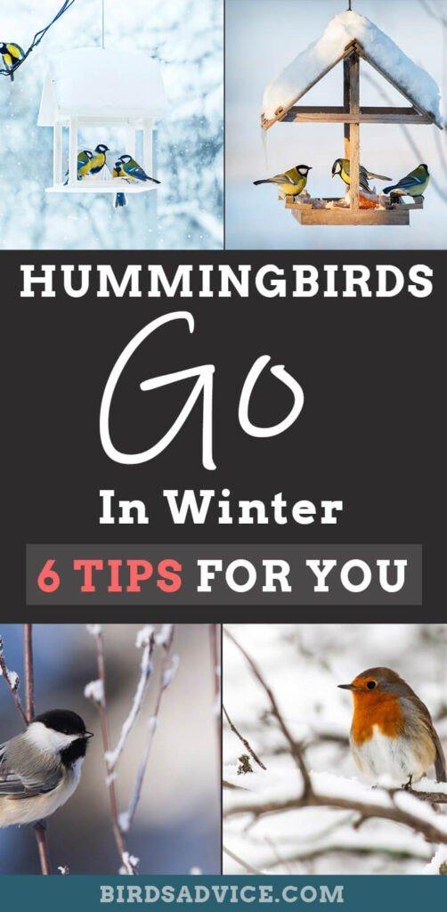 Hummingbirds Go In Winter