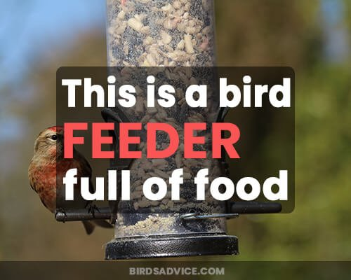 This is a bird feeder full of food.