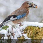 What Do Birds Eat In The Winter? Tips For winter Bird Feeding