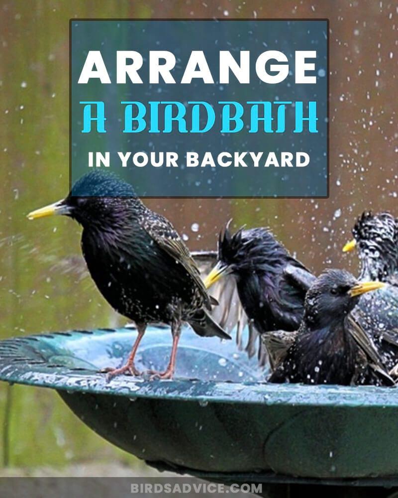 Arrange A Birdbath In Your Backyard