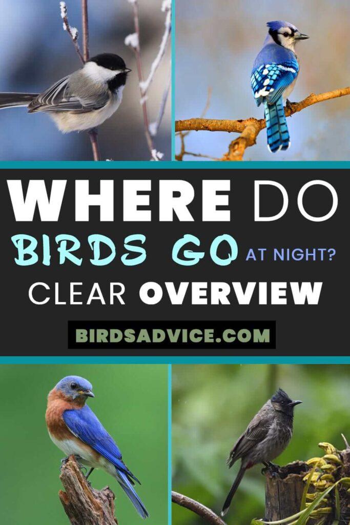 Birds Go At Night