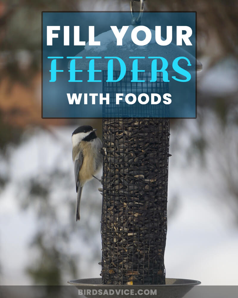Fill Your Feeders with Foods