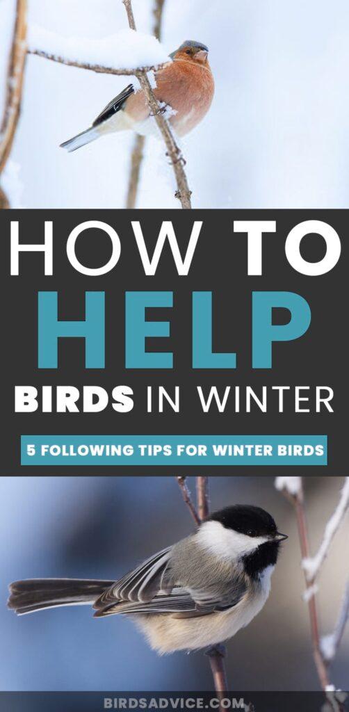 Help Birds In Winter
