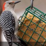 How to Make Homemade Suet for Birds? 3 Easiest Ways