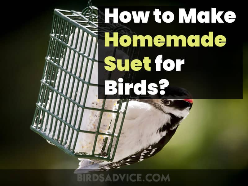 How to Make Suet for Birds at Your Home: Suet Operating