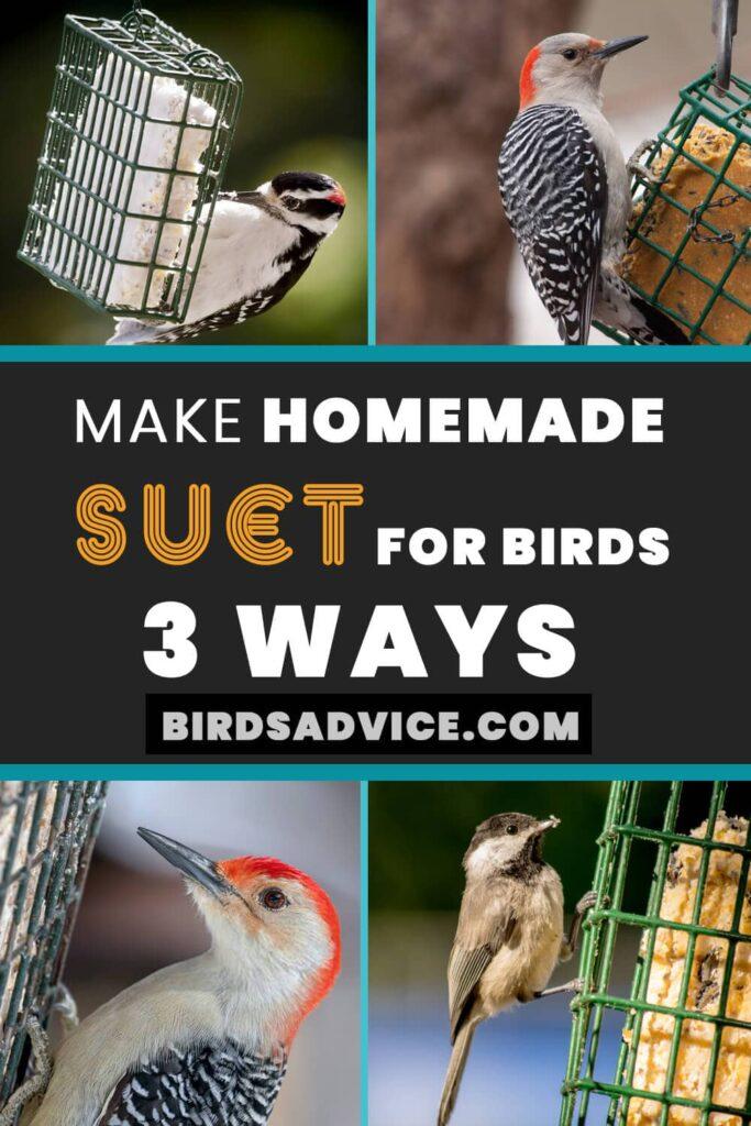 Make Homemade Suet for Birds