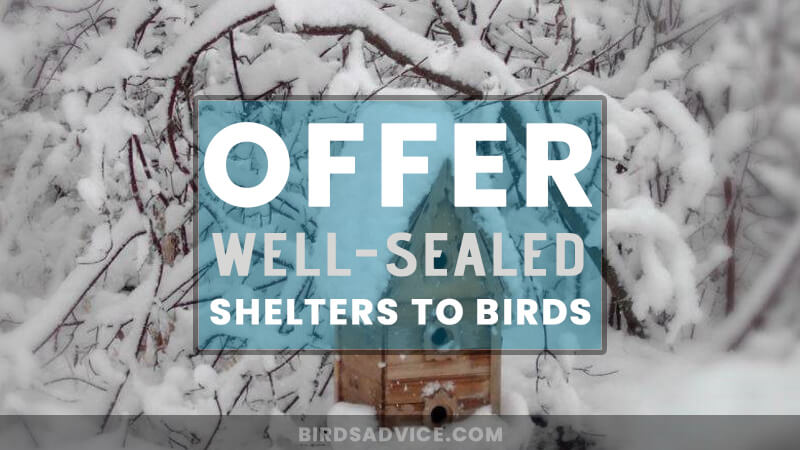 Offer Well-Sealed Shelters to Birds
