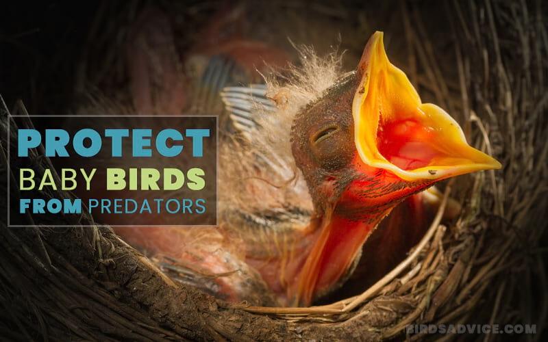 Protect Baby Birds From Predators
