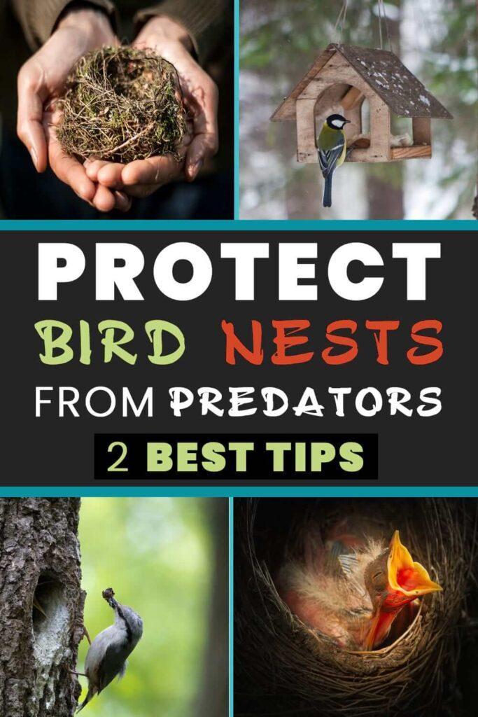 Protect Bird Nests from Predators