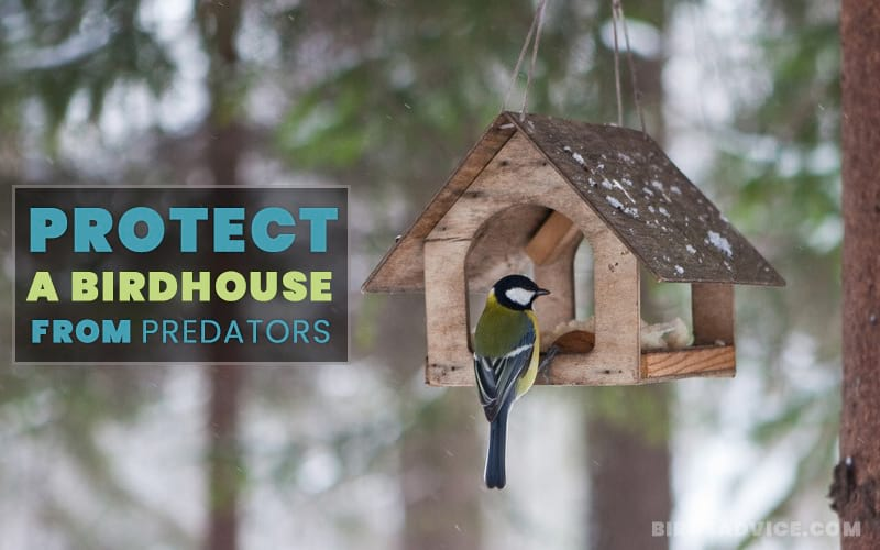 Protect a Birdhouse from Predators